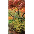 Stromy / Colourful Trees - S-126